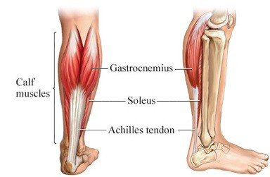 the lower leg the calf - Lower Leg Pain After Running [Guide of Causes and Treatments]