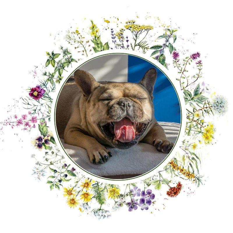dieta w psich schorzeniach