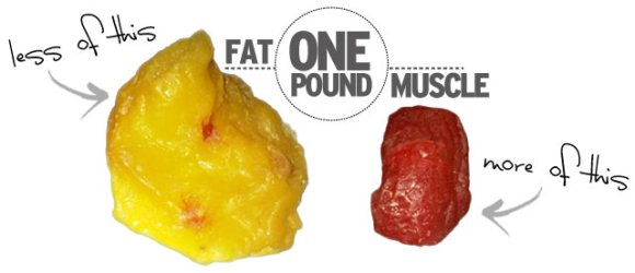 One pound fat muscle FYD