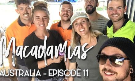 VLOG – La ferme en Australie épisode 4 – Macadamias