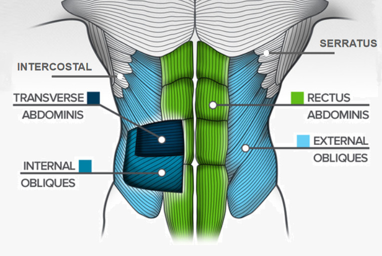 Abs anatomy - Fitzabout