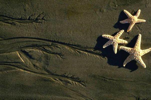 15_stelle-marine.jpg