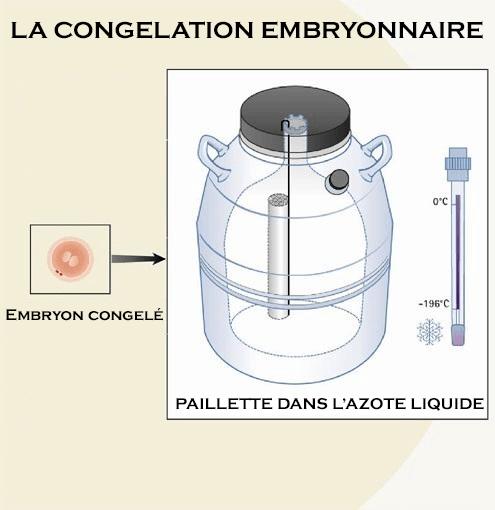 congelation-embryonnaire
