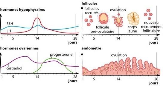 hormones fiv