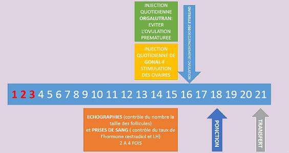 fiv cycle long