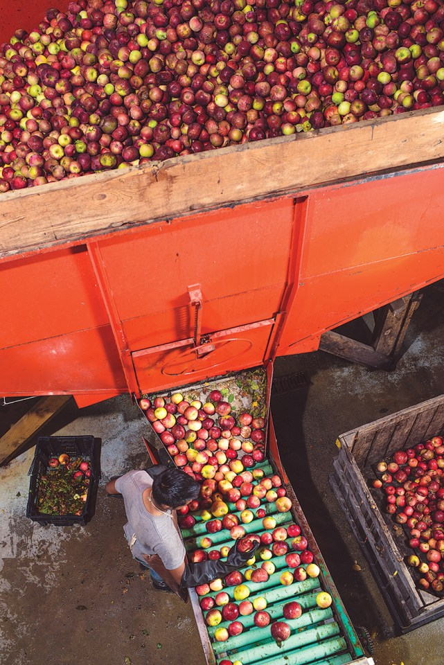 Apples ready to be pressed into cider - Five Acre Farms