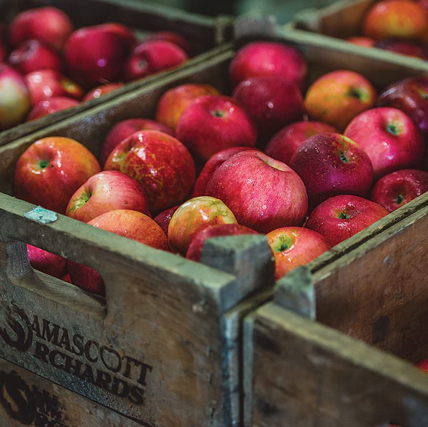 Bins of fresh apples - Five Acre Farms