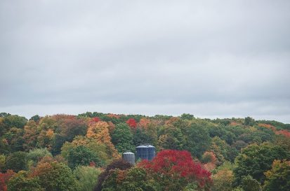 Five Acre Farms - Fall Color