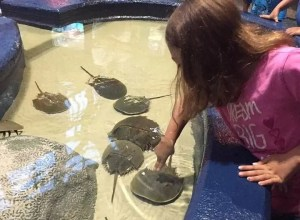 Aquarium of Myrtle Beach