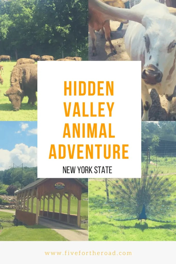 hidden valley animal adventure review five for the road