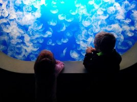 Jellies at Montery Bay Aquarium