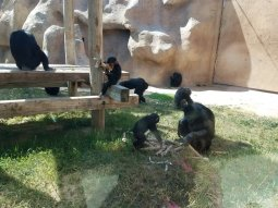 The baby monkeys were so cute