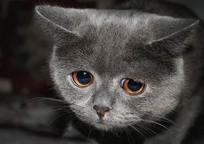 Sad_Cat_main-400x283