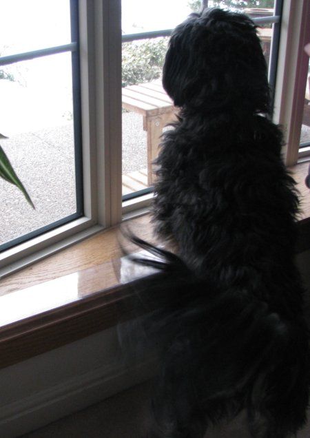 Dogs Scratching Your Doors And Window Sills