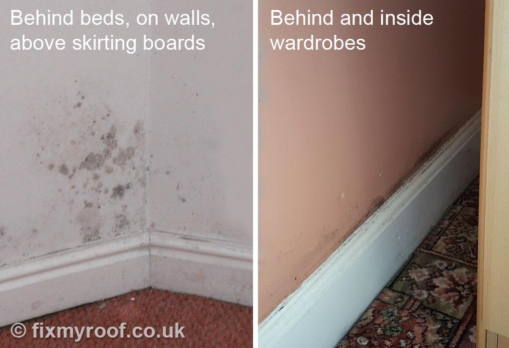 Black Mold In Bedroom