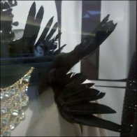 Black Bird Window Dressing Detail