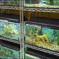 Metro Shelf Fish Tank Racks