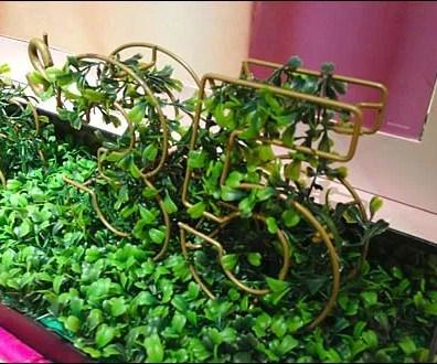 Topiary Signage Victoria's Secret Main