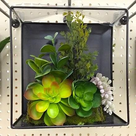 Succulents on Sale Main