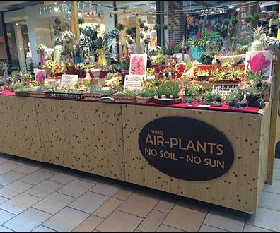 Air Plant Merchandising 1