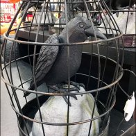 Crows in Cages for Halloween Main