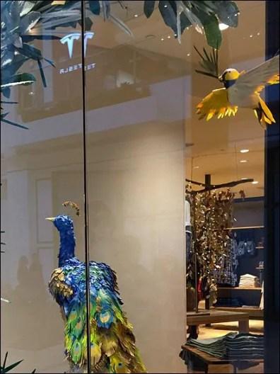 Peacock Window Dressing Main 2