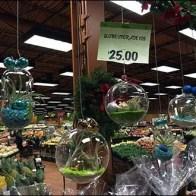 Free-Floating Plant Globes 1