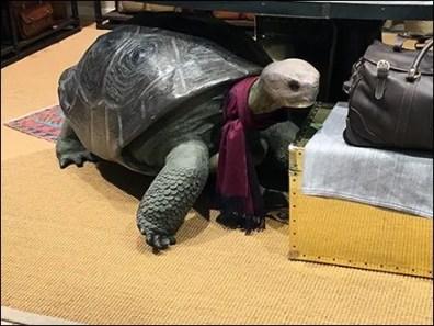 Galapagos Turtle Scarf Knot Tie Visual Merchandising