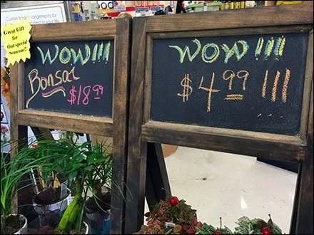 Flower & Plant Chalkboard Easel Closeup
