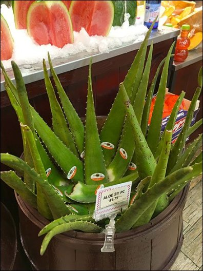 Gourmanoff Produce Aloe Bulk Barrel 3