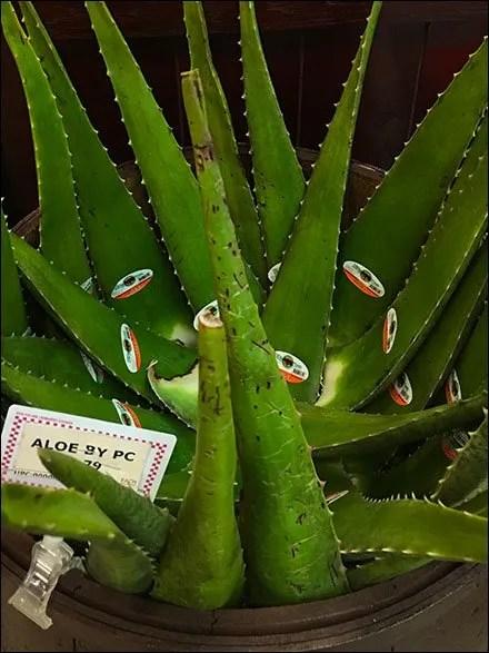 Gourmanoff Produce Aloe Bulk Barrel Main