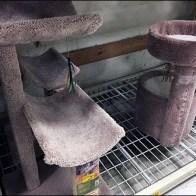 Cat Condo Pallet Rack Merchnadising 3