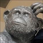 Monkey Decides On Jean Choices Closeup