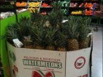 Pineapple vs Watermelon Closeup