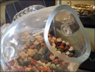 NutHouse Fishbowl Display 3