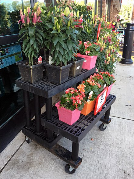Dual Level Floral Dunnage Rack At Weis 1
