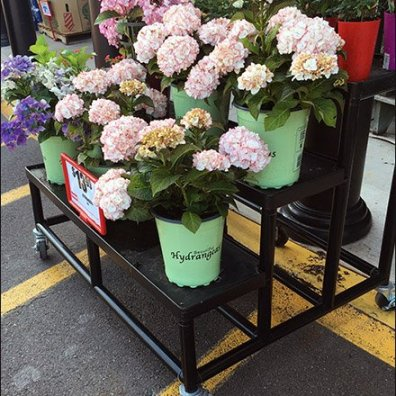 Weis Hydrangeas Floral Display Rack 1