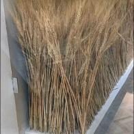 Fall Wheat Fields Blossom In Visual Merchandising