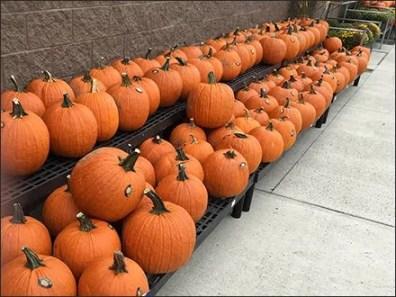halloween-pumpkin-windrows-2