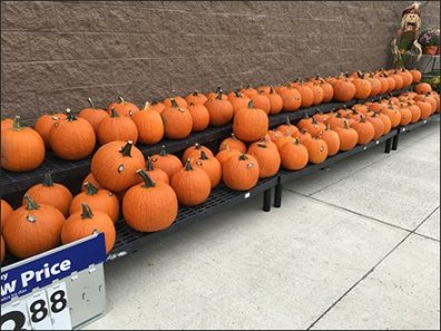 halloween-pumpkin-windrows-3