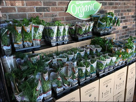 Live Organic Herbs and Spices En-Masse Display