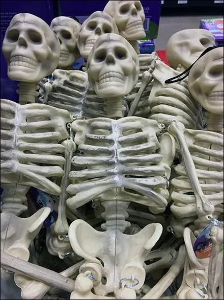skeletons-sold-by-bulk-bin-full-main