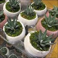Air Plants Exhibition