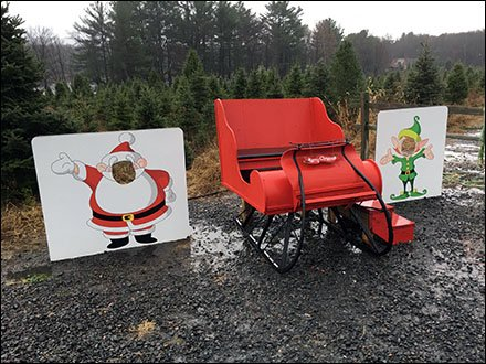 Tree Farm Photo Opportunities for Christmas