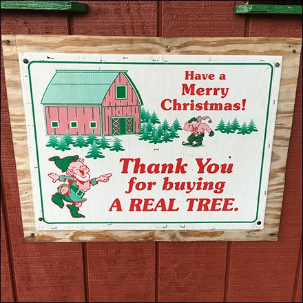 Thank You For Buying A Real Christmas Tree