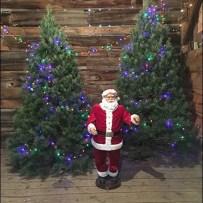 Tree Farm Christmas Tree Showrooming