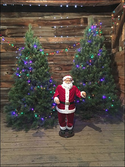Tree-Farm Christmas Tree Showrooming