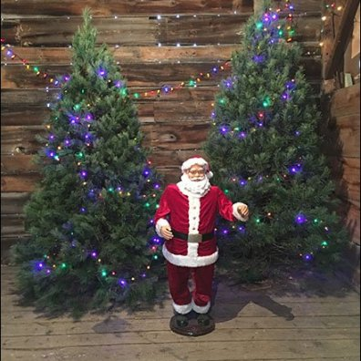 Tree Farm Christmas Tree Showrooming