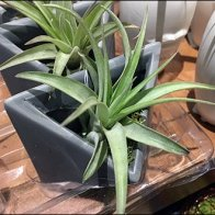 Life Magnetic Mated Plant Tray 3