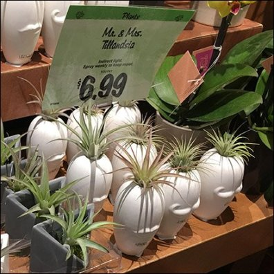 Mr & Mrs Tillandsia Air Plants Overall